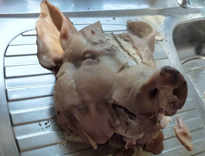 boiled pigs head